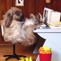 the rabbit using the computer